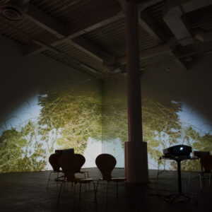 Natures : video installation archives
